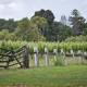 Vineyard_fence